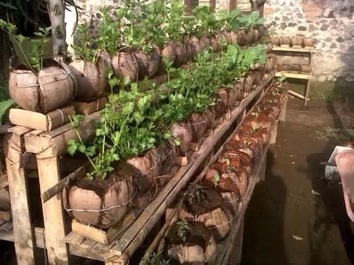 Permakultur, Seni Bertani Selaras Alam