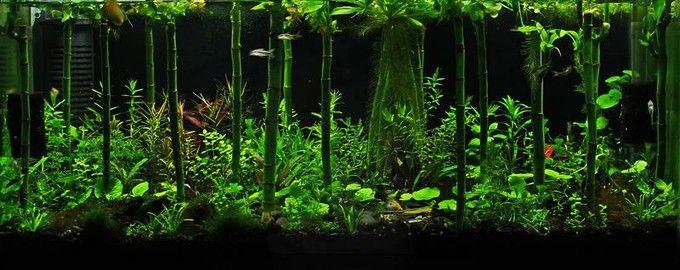 Epiphyte S Indoor Aquatic Rainforest Nature Aquarium Aquascape Fresh Water Fish Tank