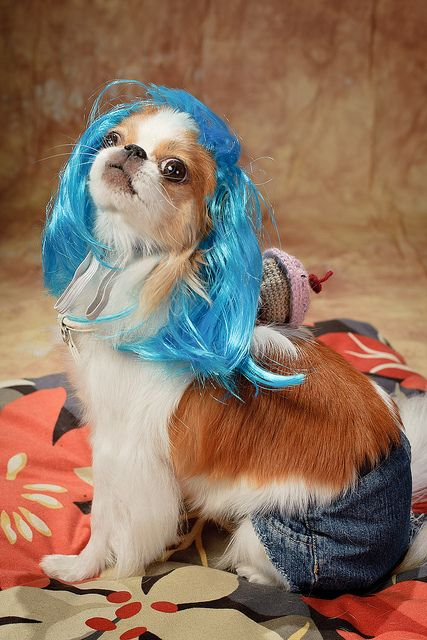 Katy Perry Puppy :)