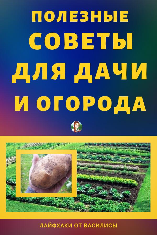 советы огородникам осенью