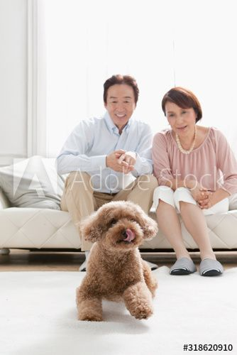 Couple sitting on sofa and looking at dog , #ad, #sitting, #Couple, #dog, #sofa #Ad
