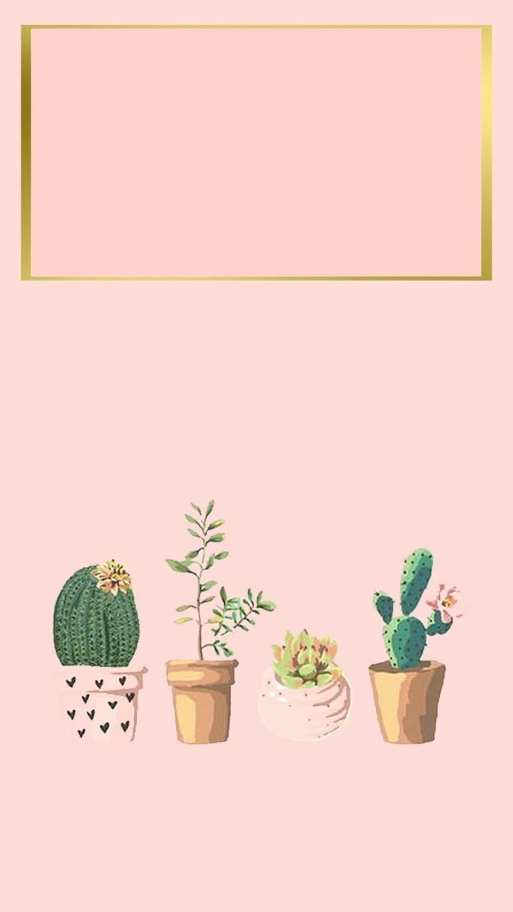 Iphone Wallpaper Iphone Background Succulent Cactus