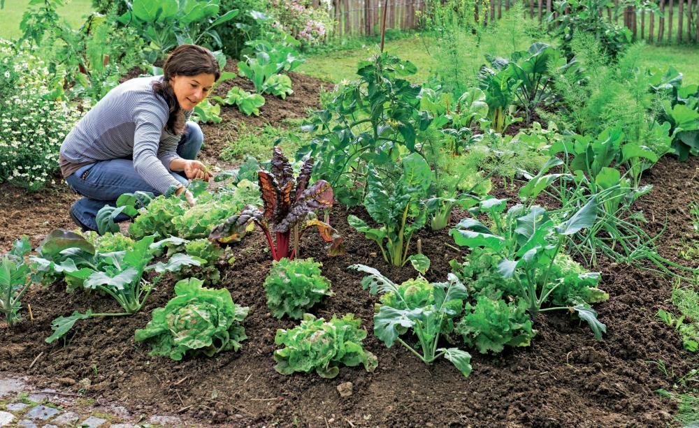 Gemüseanbau: Große Ernte auf kleiner Fläche | Küchengarten, Ernte ...