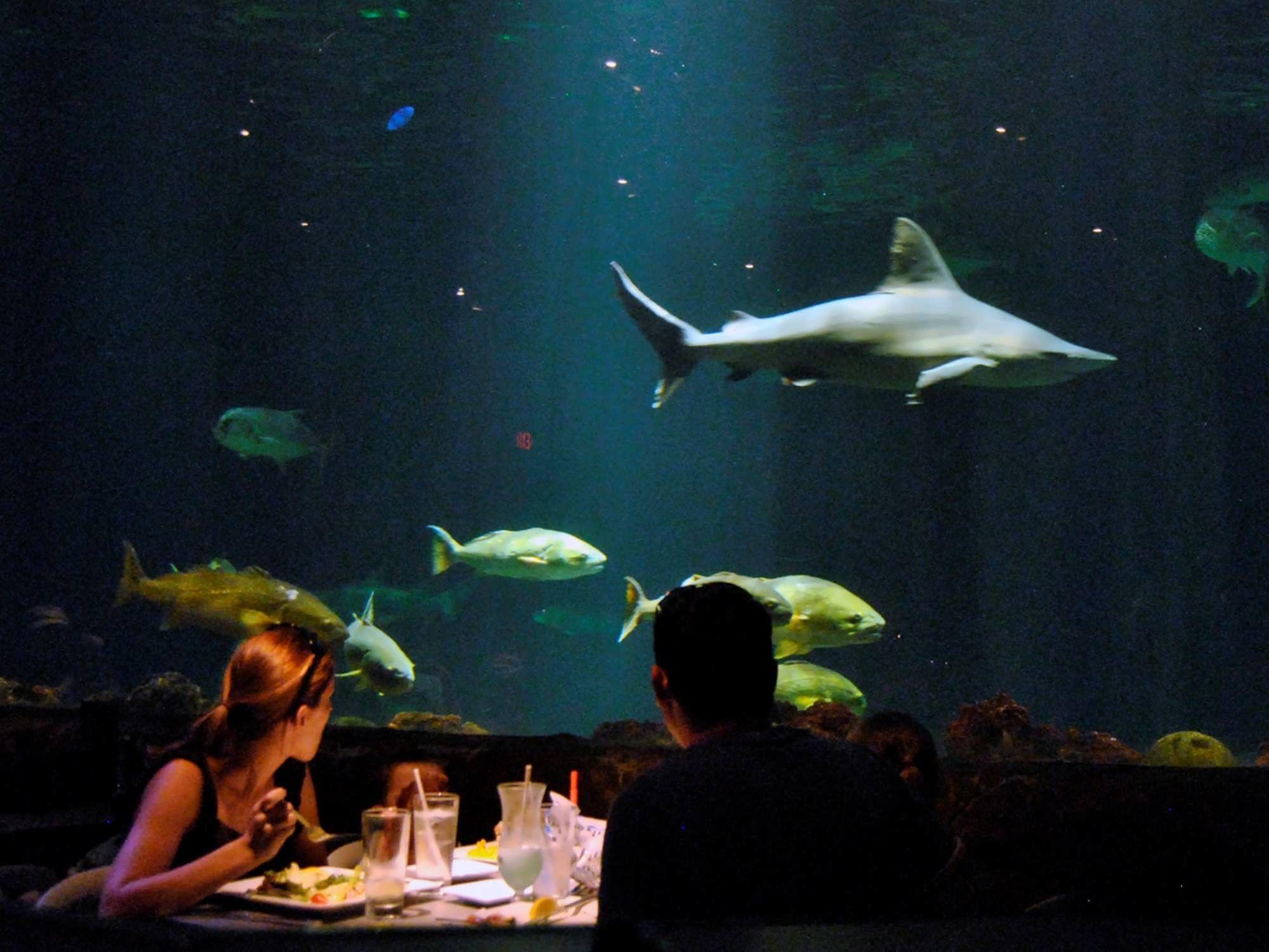 Underwater Shark Grill