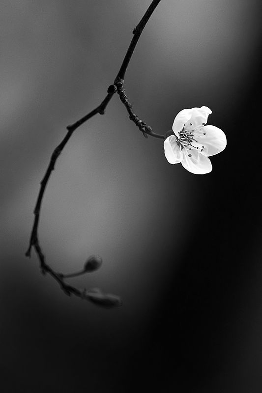 Pinterest pages black and white photography pinterest bridge i chose this picture because i like the lone white flower against the gray and black background the contrast really makes the flower pop out and i draws mightylinksfo