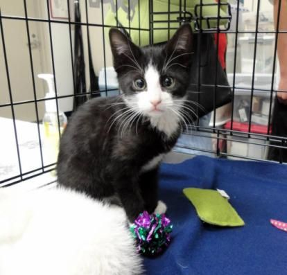 Our Mission Michelson Found Animals Foundation Crazy Cats Cat Obsession Pets Cats