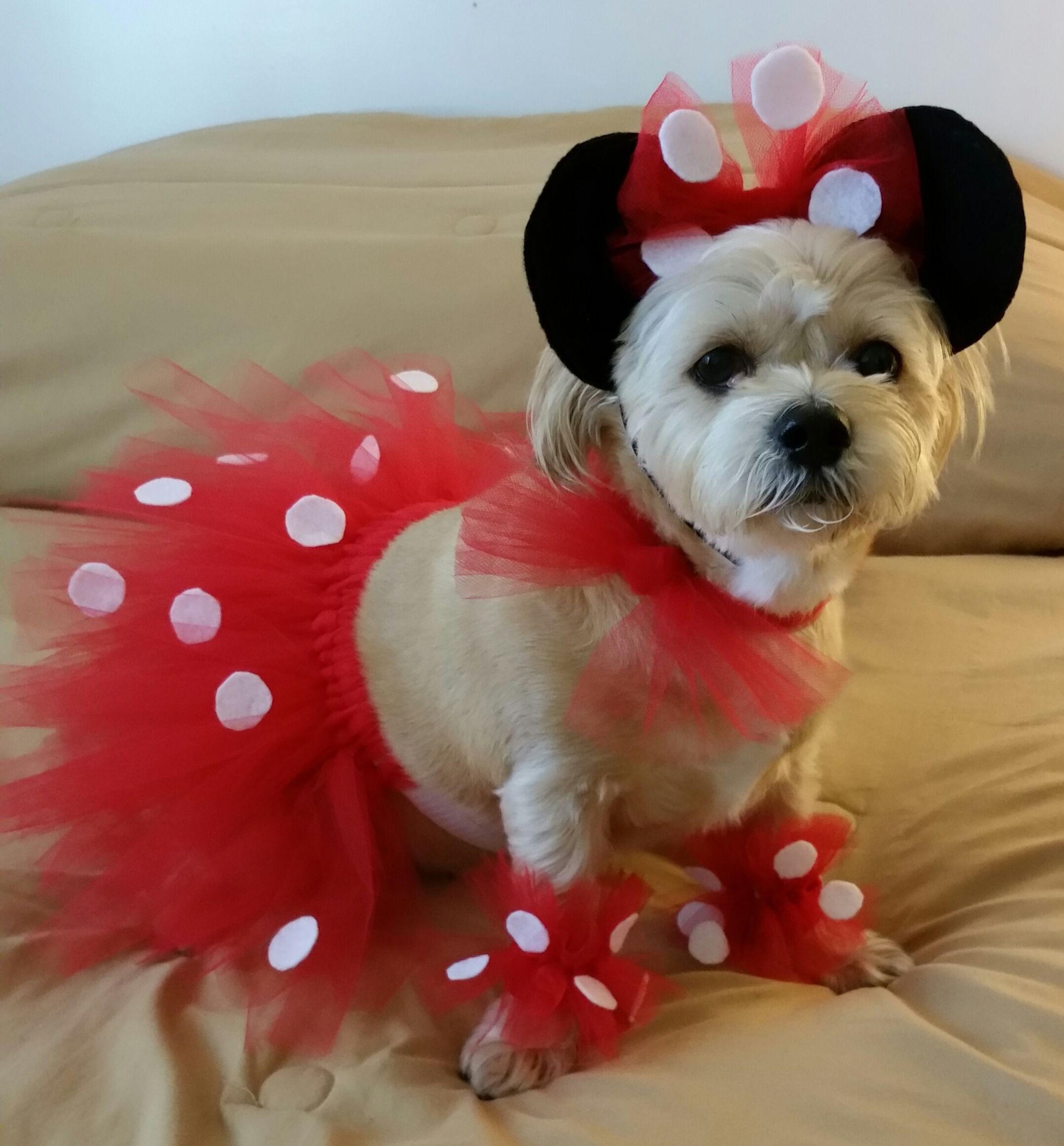 Mascotas Halloween para perros