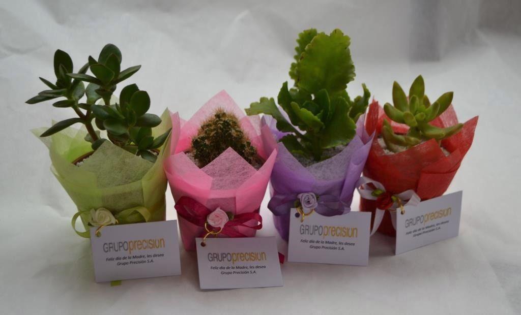Recuerdos De Bautizo Con Cactus.Pin De Carolina Camposano En Adornos Y Macetas Recuerdos