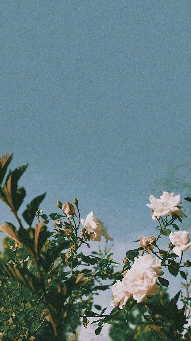 White Roses Ig Amberrlouuu Desert Palms Wanderlust