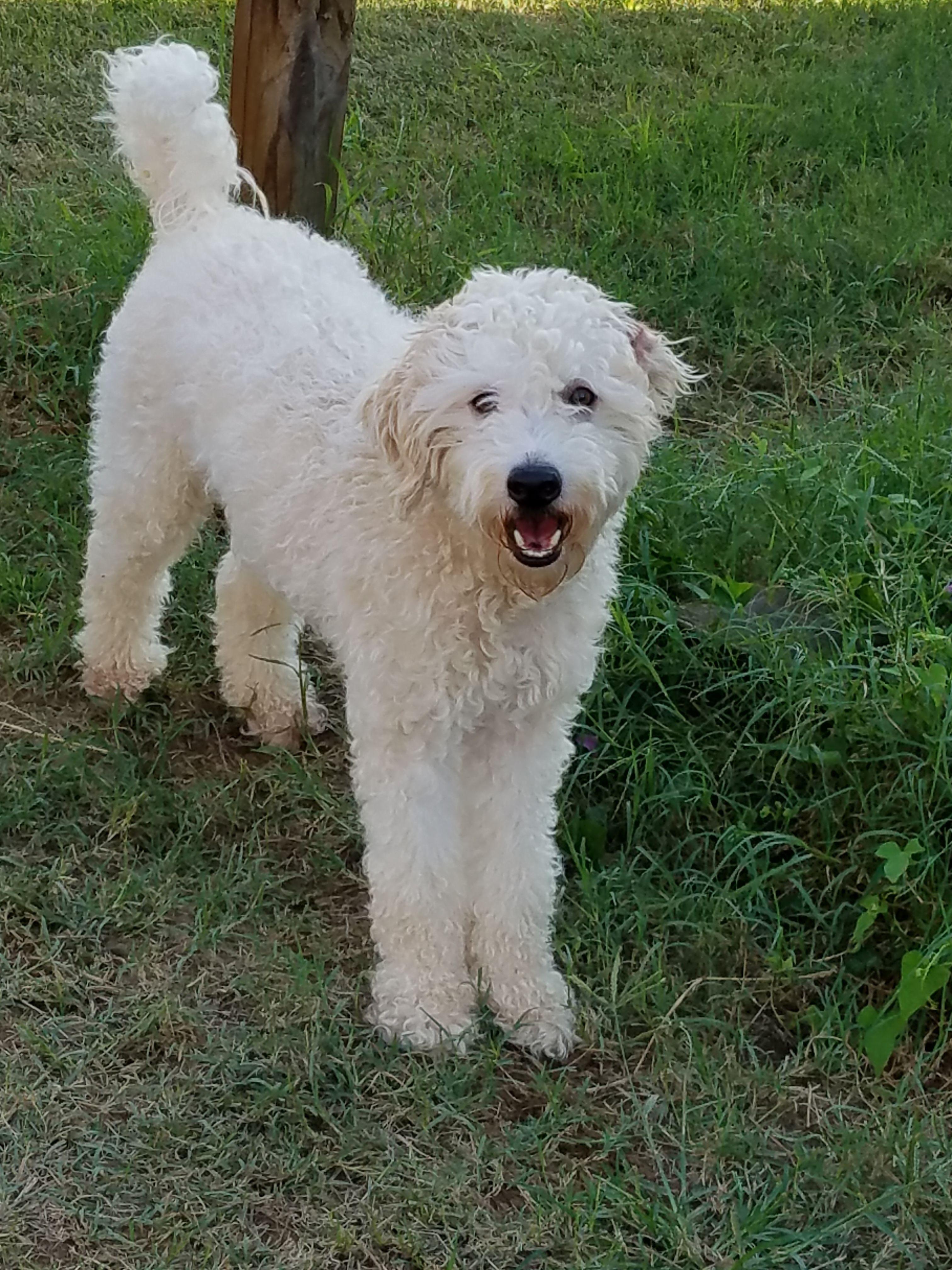Adopt Dole On Aggressive Dog Dogs Dog Park