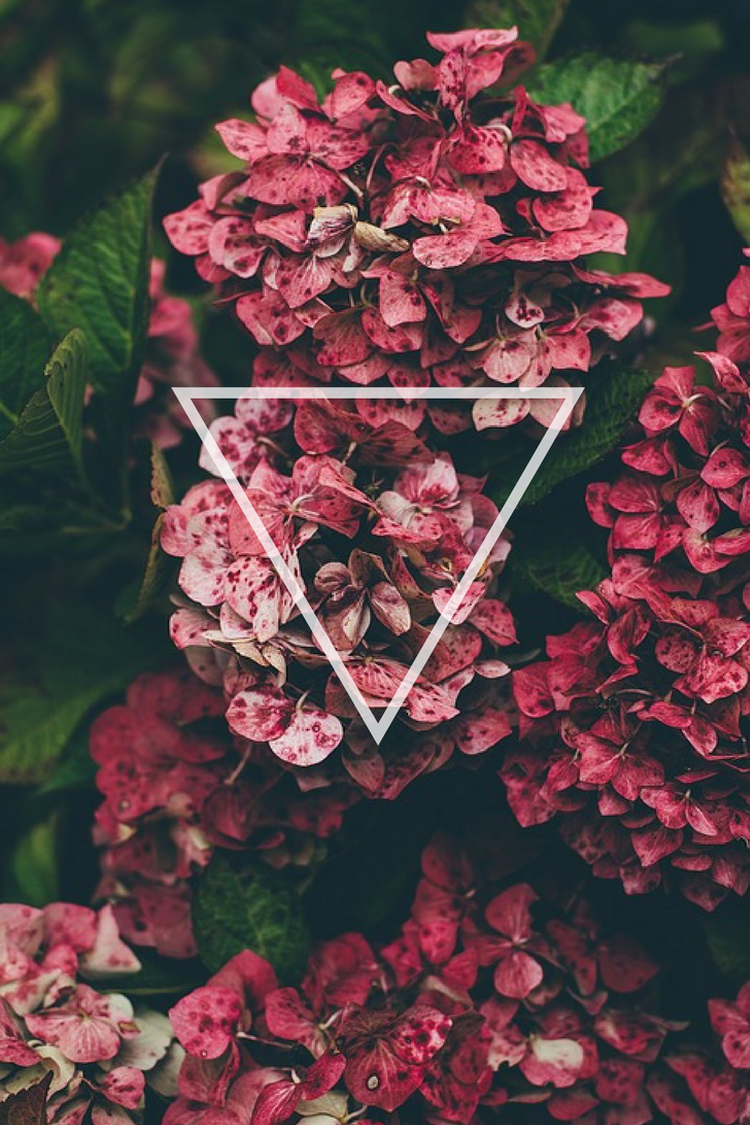 Flowers Triangle Pink Wallpaper Background Phone Iphone