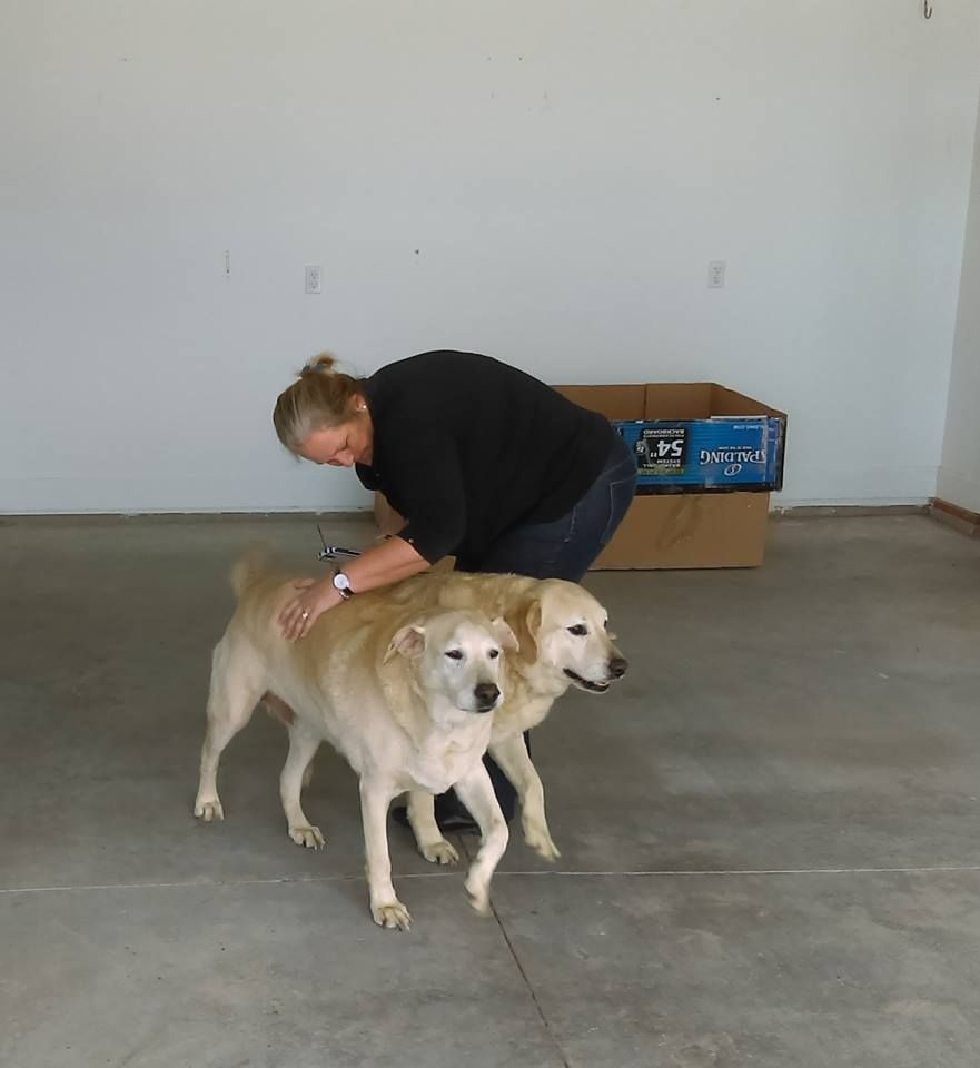 A happy reunion of 2 labs from South Africa to Boise Idaho.