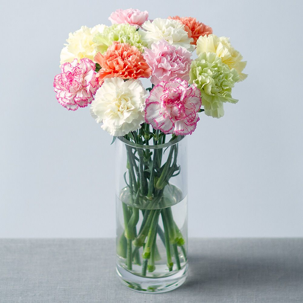 12 longlasting single Carnations in mixed colours