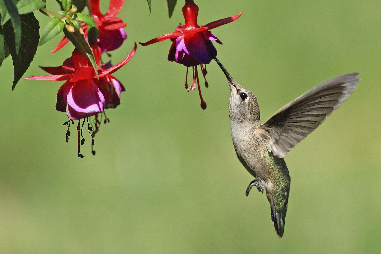 Se você quer ter um jardim cheio de borboletas, não use defensivos químicos nas plantas, opte sempre pelos naturais.