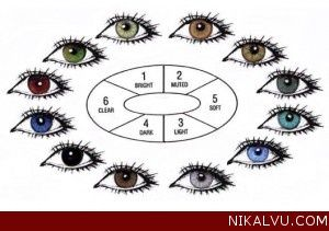 more cool eye facts