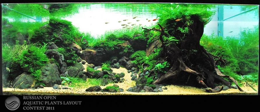 Recavox Blog Aquascape | Fish tank decorations