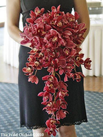Stunning cascading bridal bouquet @ Foxglove Club  Wine cymbidium orchids. Flowers and photo by The Wild Orchid floral design in Sebastopol.