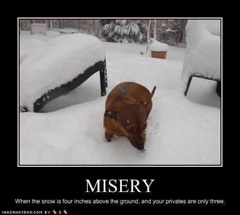 Pin By Dave On Haha Funny Dog Photos Funny Dogs Dachshund Love