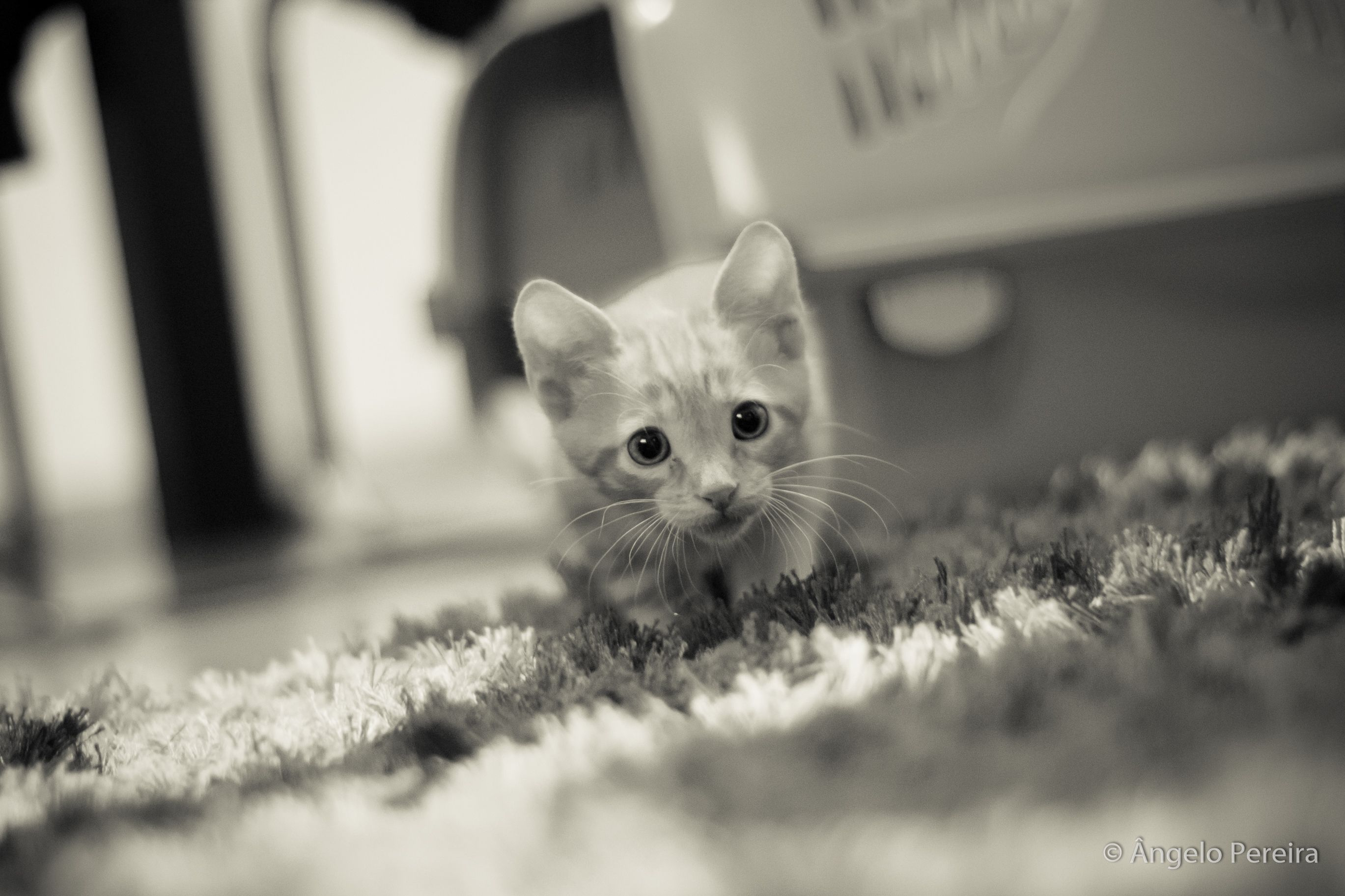 #Baby #Cat #BabyCat #Kitten