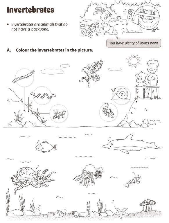Nice Vertebrate Worksheet Kids Printable Activities Worksheets ...
