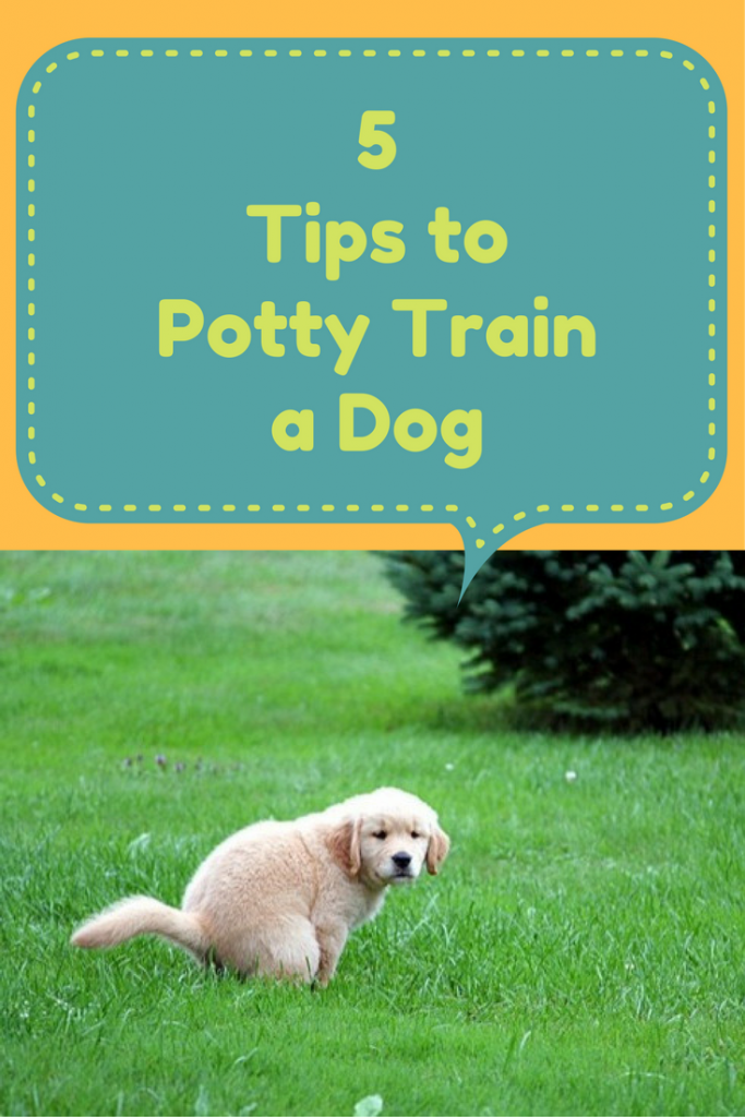 5 Tips To Potty Train A Dog Sleeping Puppies Baby Dogs Dog Care