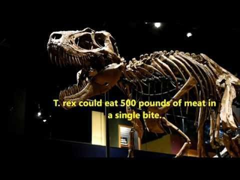 Tyrannosaurus Rex - An Episode of the wHat iF Studios Mini-Doc Series #tyrannosaurusrex Tyrannosaurus Rex - An Episode of the wHat iF Studios Mini-Doc Series #tyrannosaurusrex Tyrannosaurus Rex - An Episode of the wHat iF Studios Mini-Doc Series #tyrannosaurusrex Tyrannosaurus Rex - An Episode of the wHat iF Studios Mini-Doc Series #tyrannosaurusrex