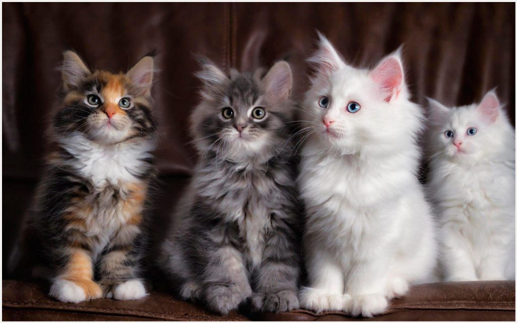 Cute Cats Wallpaper