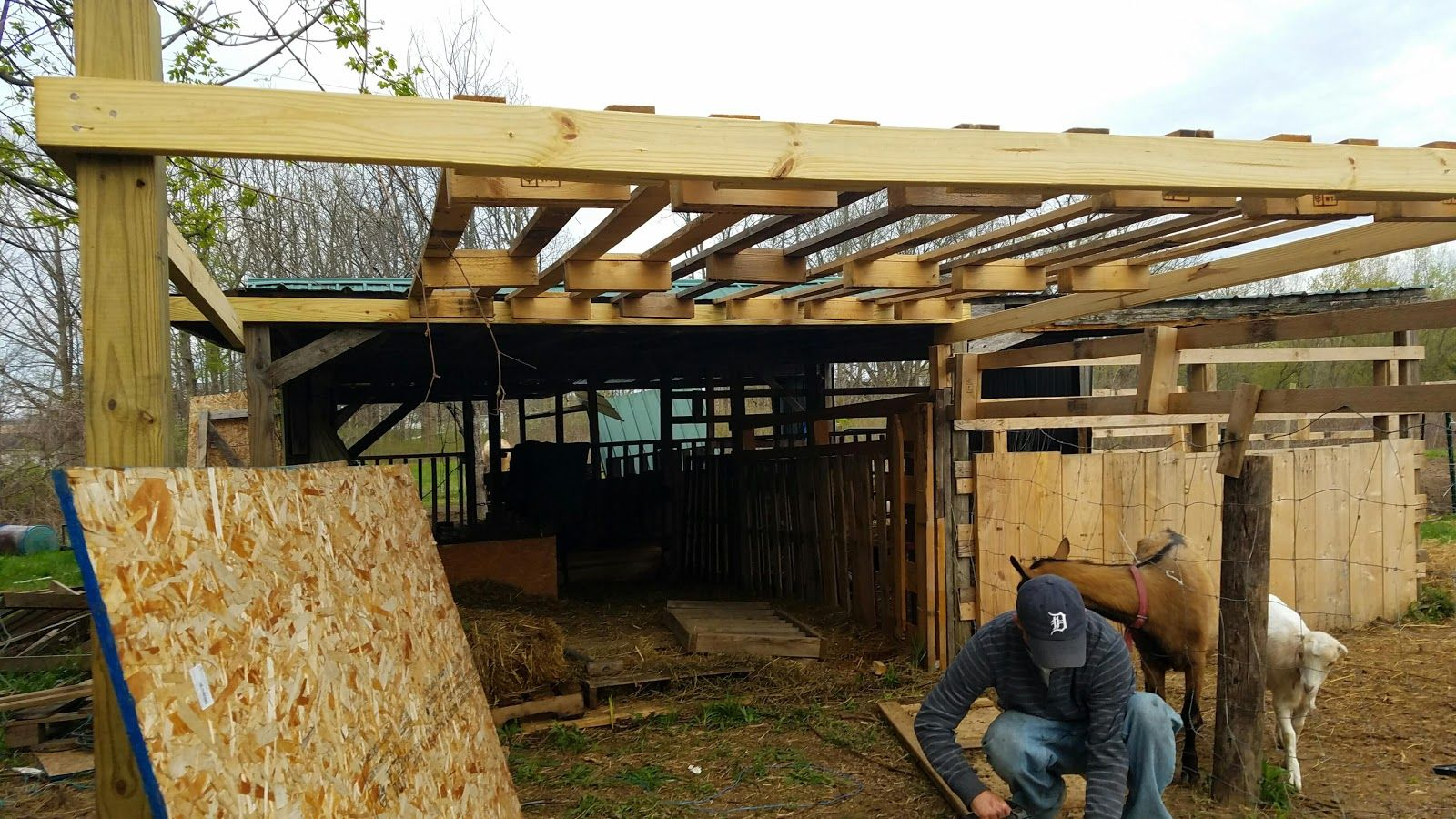 Homestead chickens and livestock: Goat barn extention