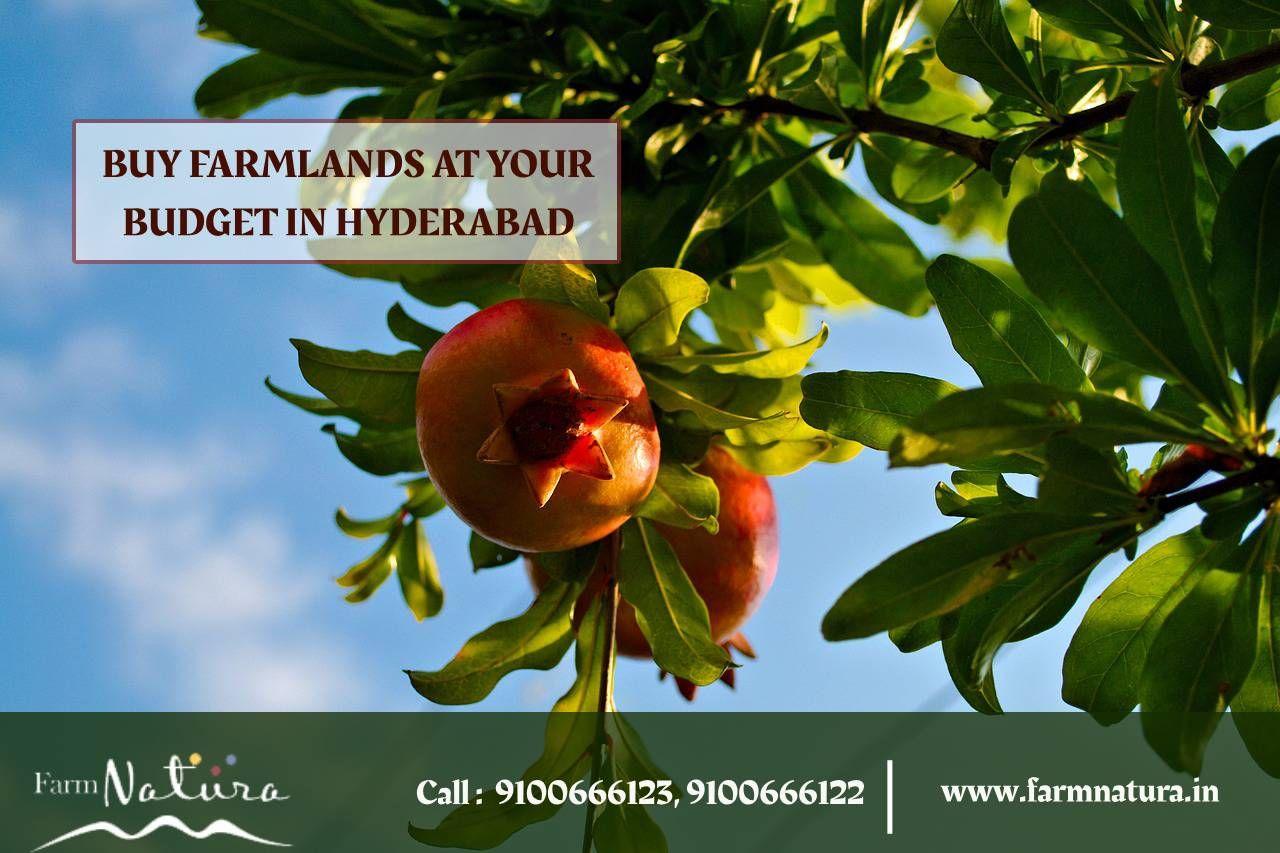 Buy Farmland at Farmnatura within your budget Hyderabad