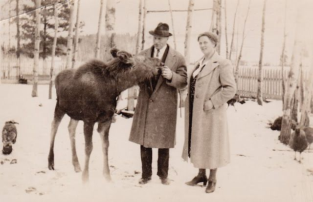 blogger's great-grandparent's had a pet moose :)