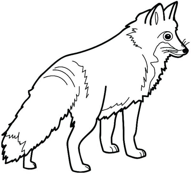 Arctic Fox Coloring Pages In 2020 Fox Coloring Page Animal Coloring Pages Puppy Coloring Pages