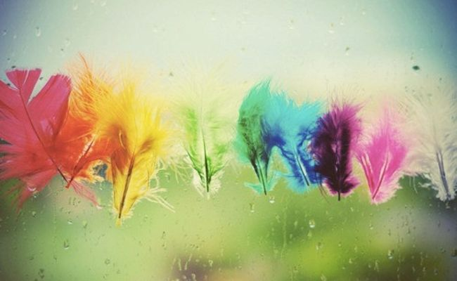 plenty of colour - feather