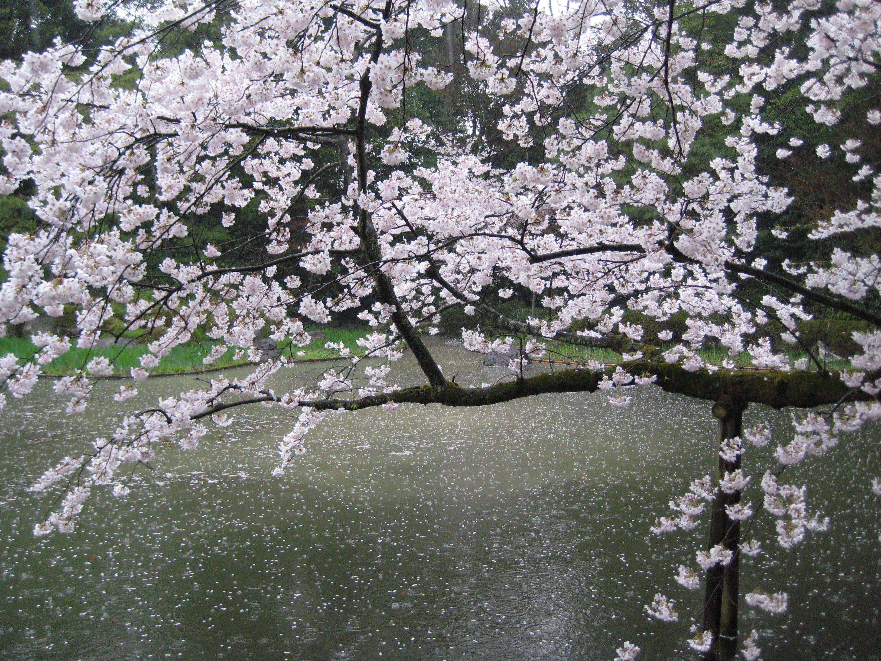 Best Ways To Enjoy The Washington D C Cherry Blossom Festival Cherry Blossom Festival Places To Go Favorite Places