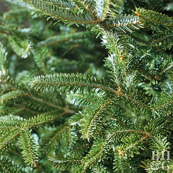 Country Pines Christmas Tree Farms: The Best Conifers For Your Yard