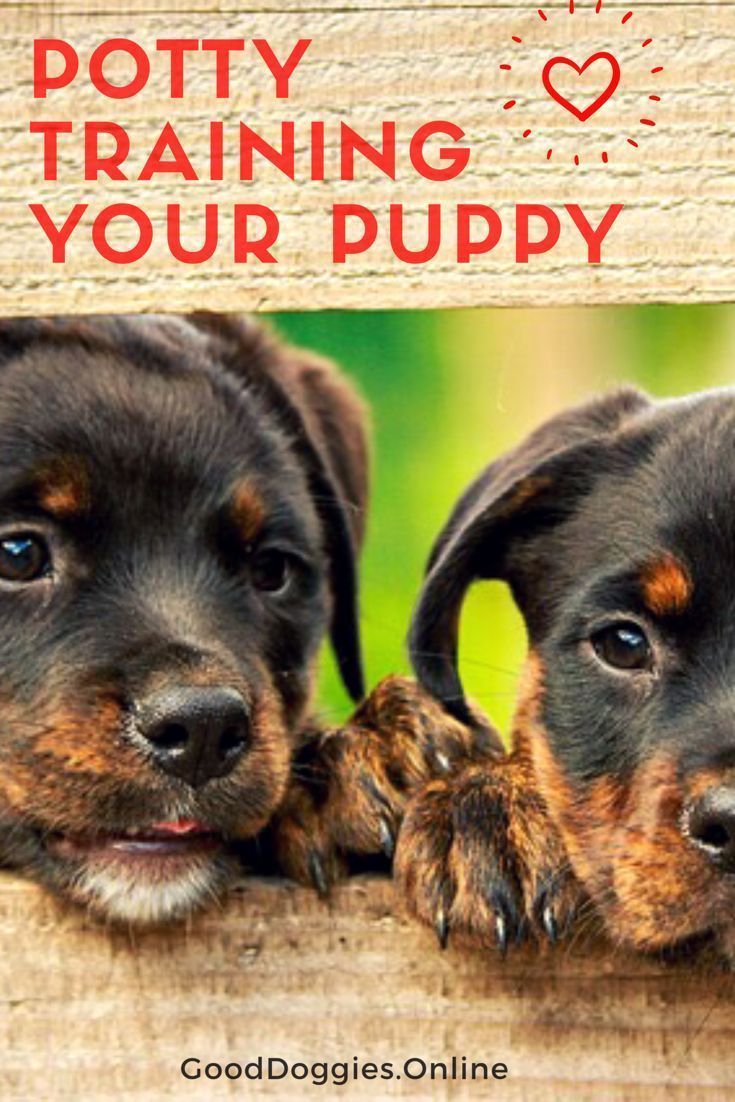 Check out these tips and tricks on potty training your new puppy ... | Dog Training Tips And Tricks
