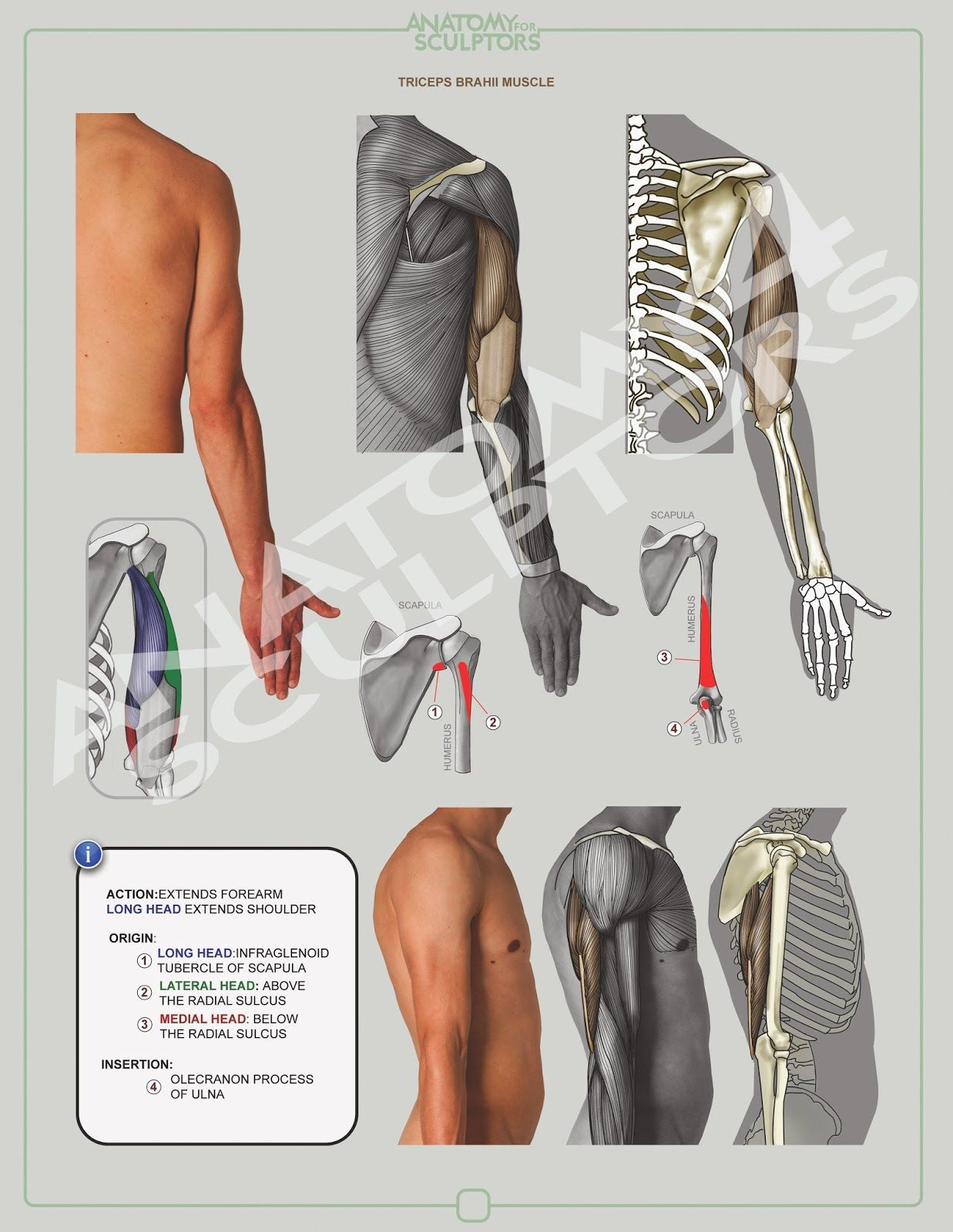 ANATOMY NEXT, the artist platform | anatomy | Pinterest | Anatomy ...