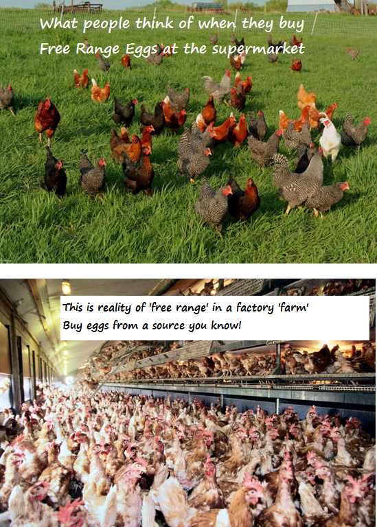 is factoy farming cruel to animals Factory farming is the main cause of animal suffering and abuse these silent  victims have been converted into machines that generate meat,.