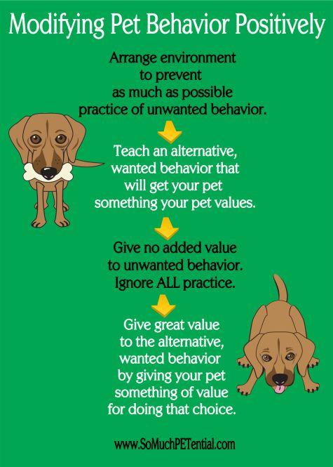 Four Steps To Solving Pet Behavior Problems Animal Behavior Dog