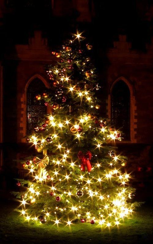 Christchurch Cathederal Christmas Tree Dublin Ireland By H Warren Paysage Noel Noel Dans Le Monde Sapin De Noel