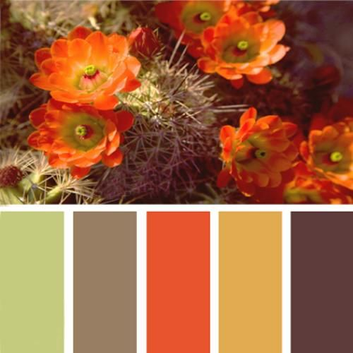 Brown And Blue Interior Color Schemes For An Earthy And: Best 25+ Orange Color Schemes Ideas On Pinterest