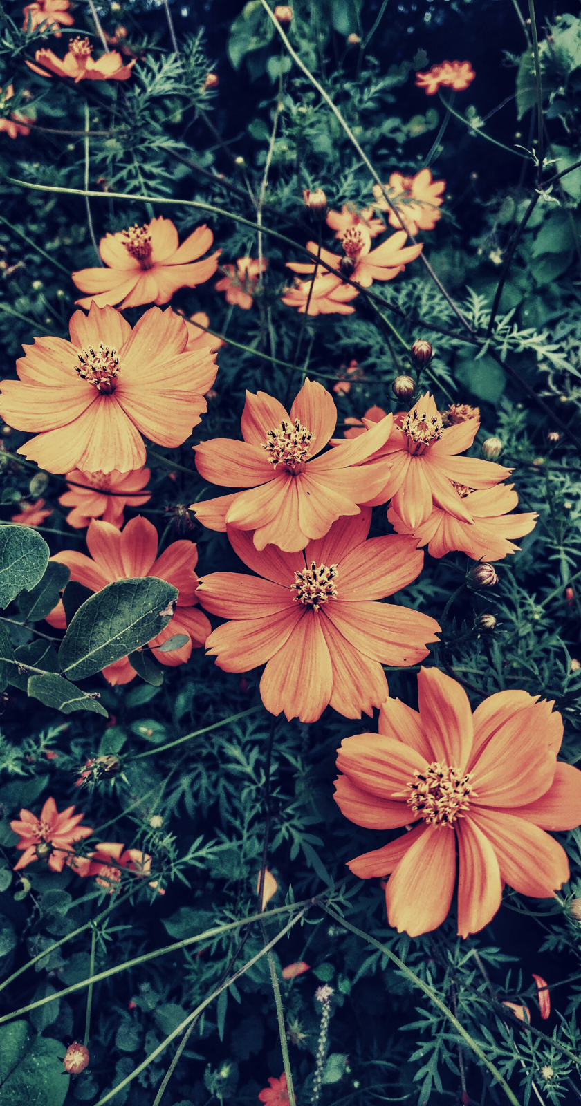 Wallpapers For Iphone 25 Best Floral Wallpapers From Tumblr In 2020 Floral Tumblr Vintage Floral Backgrounds Iphone Wallpaper