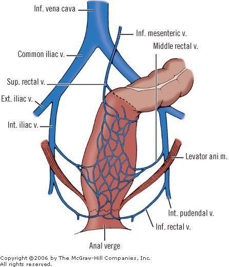 Venous drainage of rectum | Education | Pinterest