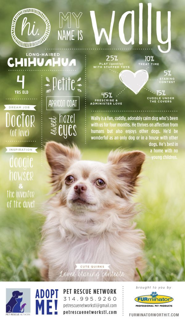 Wally poster 600 1 043 pixels typography for Dog adoption flyer template
