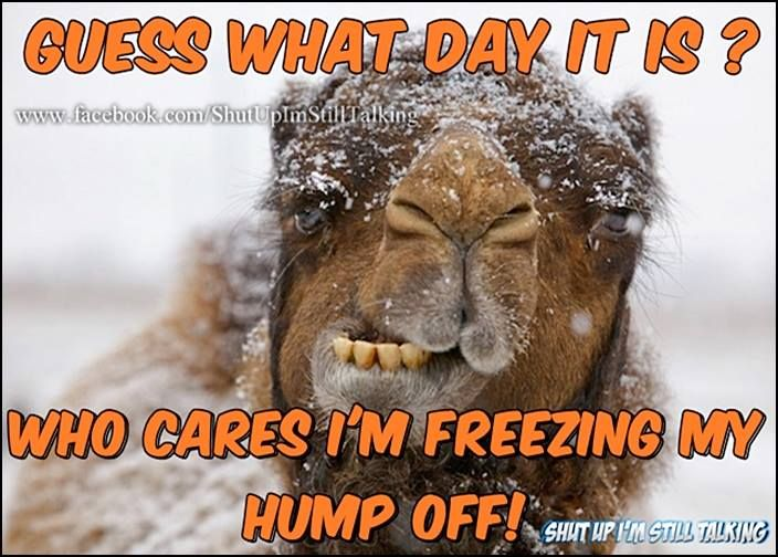 Happy Snowy Wednesday In The Big Quot D Quot Funny Good Morning