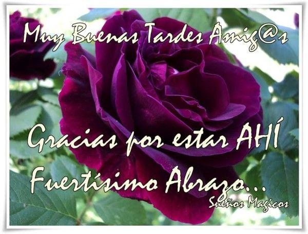 Feliz Tarde Buenas Tardes 1 Jpg 600 455 Imagenes De Buenas