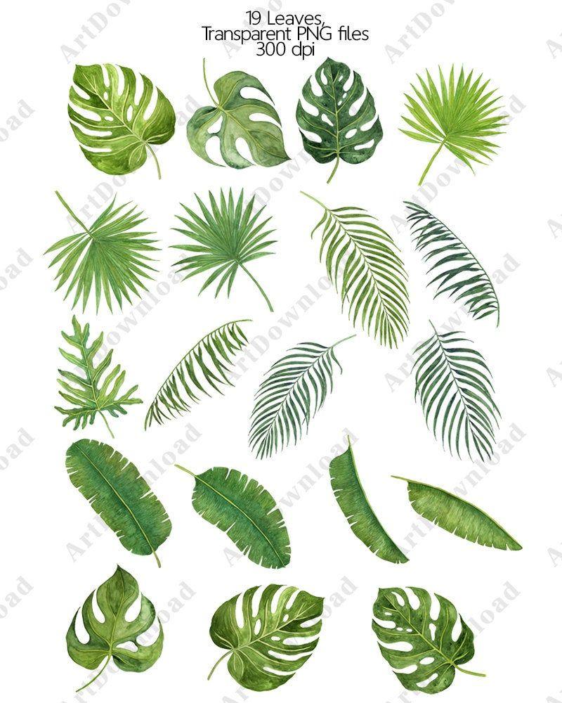 Tropical Leaves Watercolor Leaves Clip Art Monstera Leaves