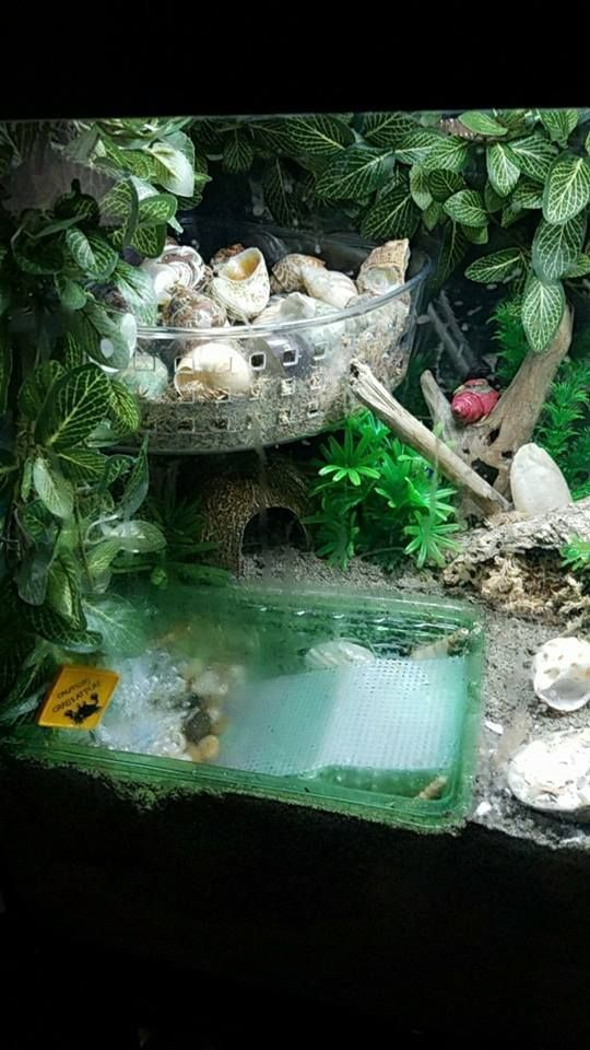 A Guide To Land Hermit Crab Pools Hermit Crab Tank