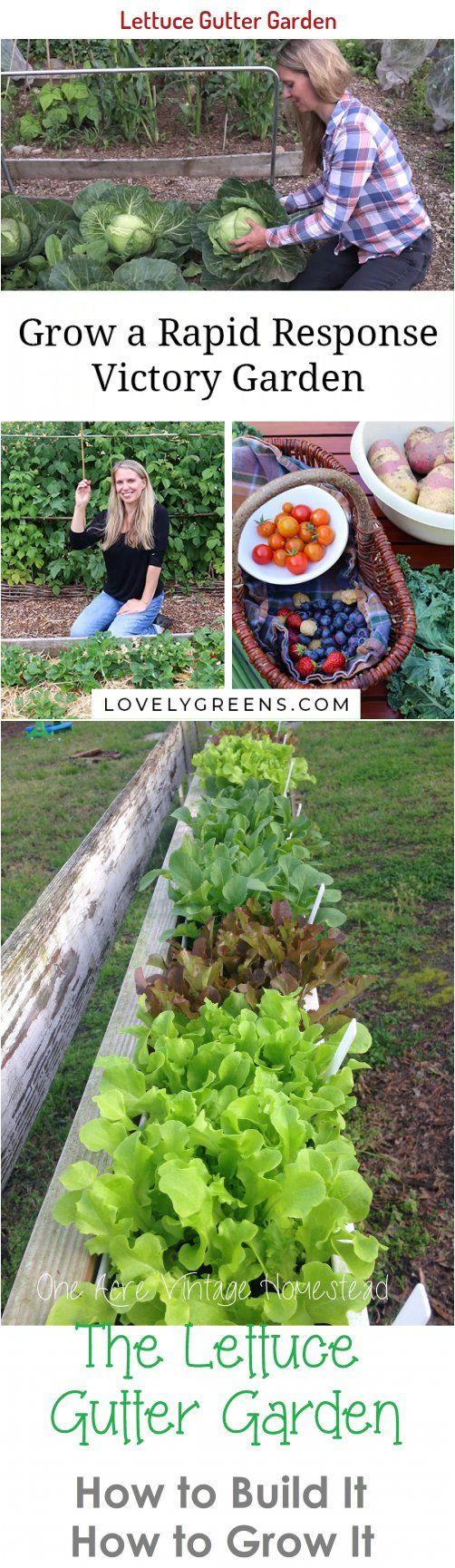 Lettuce Gutter Garden How To Build It How To Grow It One Acre Vintage Homestead In 2020 Gutter Garden Planting Vegetables Soil