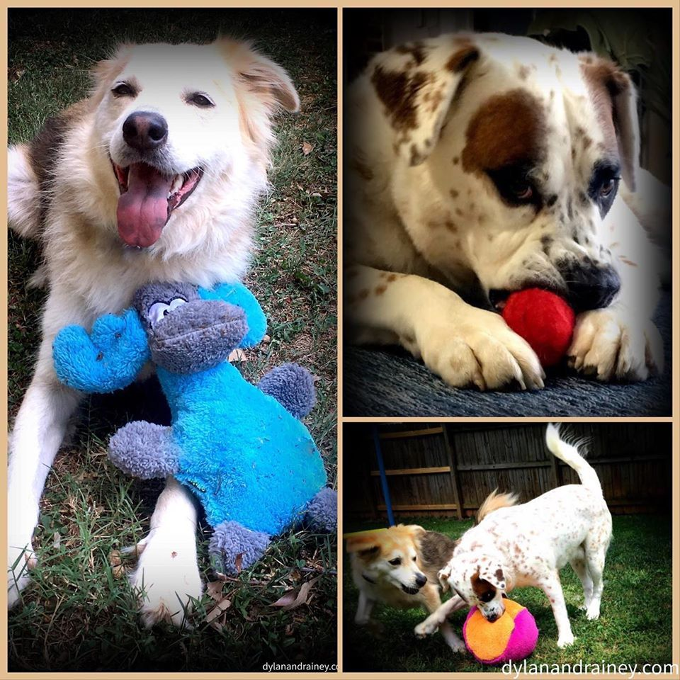 Dog Toys Dylan Rainey Usa Made Eco Friendly Toys For Large