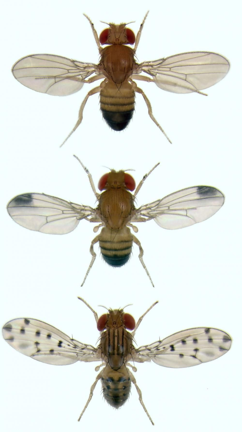 Get rid of gnats by using products found around the home. Since they ...